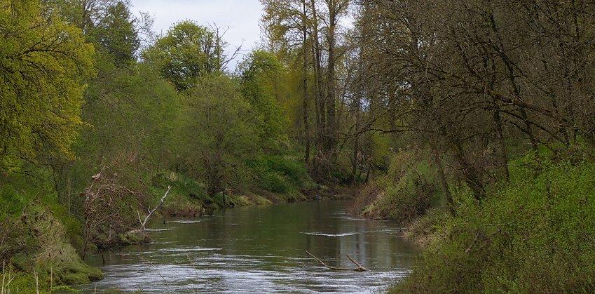 The Chehalis River in Lewis County near Chehalis, Washington.
