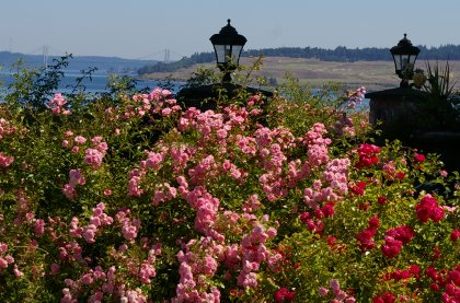 The view from downtown Steilacoom, Washington.