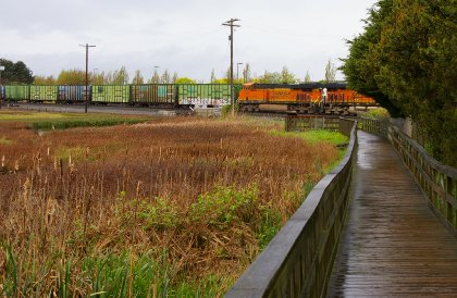 The Educational Marsh in Edmonds, Washington - image.