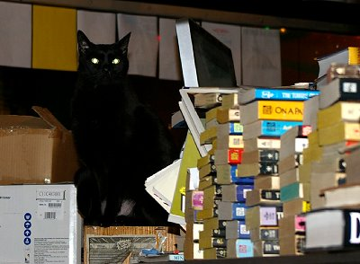 The quaint little book store kitty corner from the Harlequin in Olympia Washington - Photo.