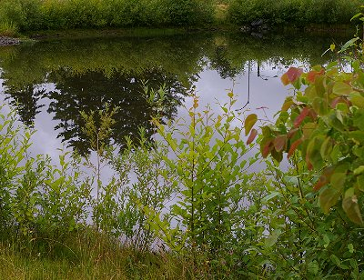 The wetland at the Puyallup Fair parking lot in Puyallup, Washington.
