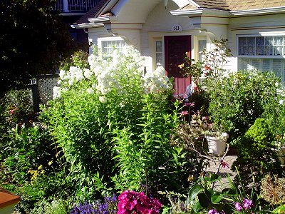 A beautiful cottage and lovely flowered yard in Tacoma, Washington - Photo.